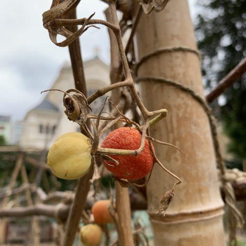 jardin Villa Freundler